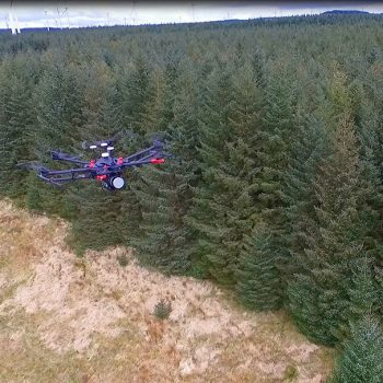 Tree Drone Footage